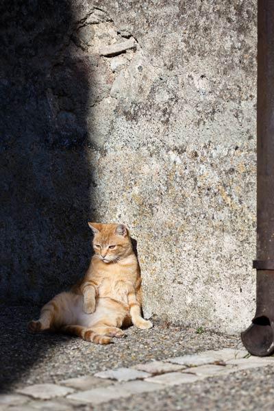 picture-cat01-087.jpg