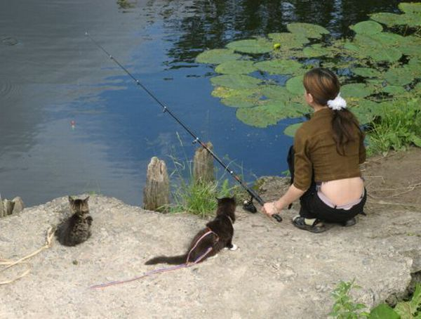 picture-cat01-090.jpg