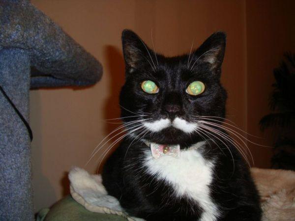 picture-cat01-091.jpg