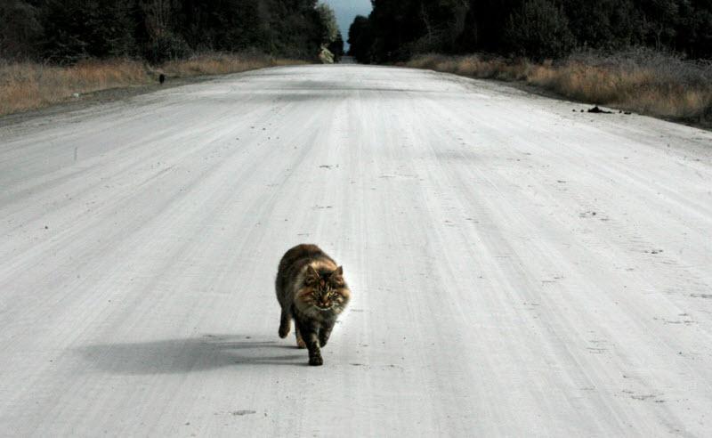 picture-cat01-092.jpg