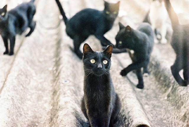 picture-cat01-093.jpg