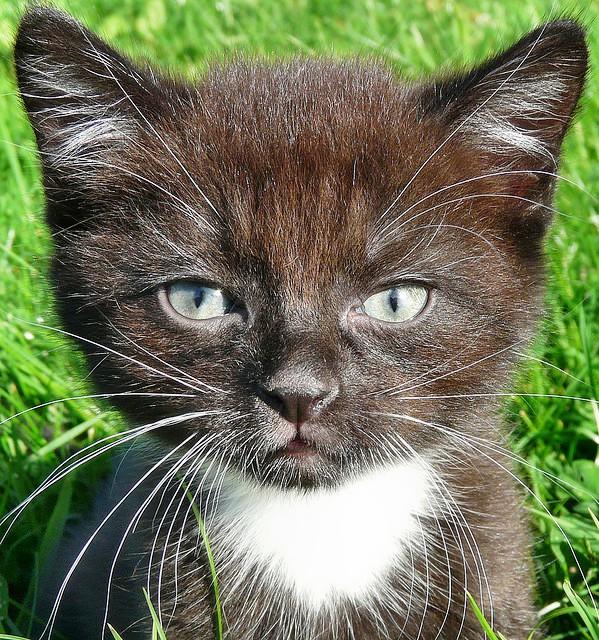 picture-cat01-095.jpg