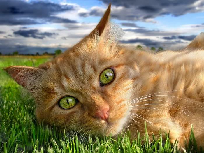 picture-cat01-096.jpg
