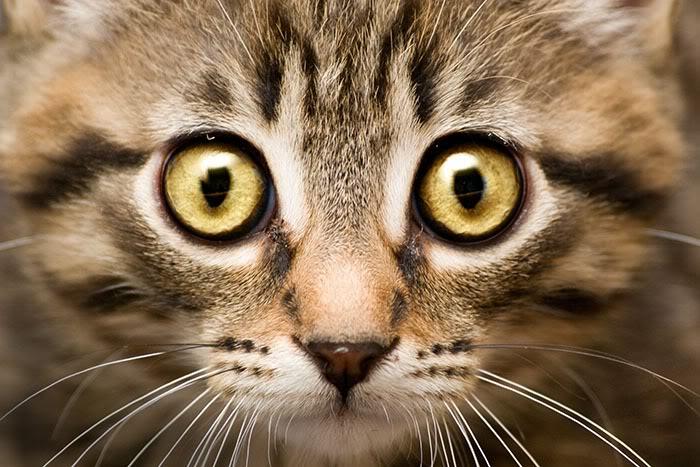 picture-cat01-098.jpg