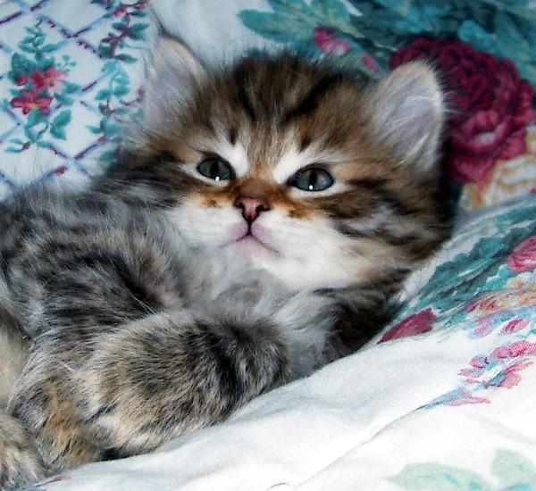 picture-cat01-099.jpg