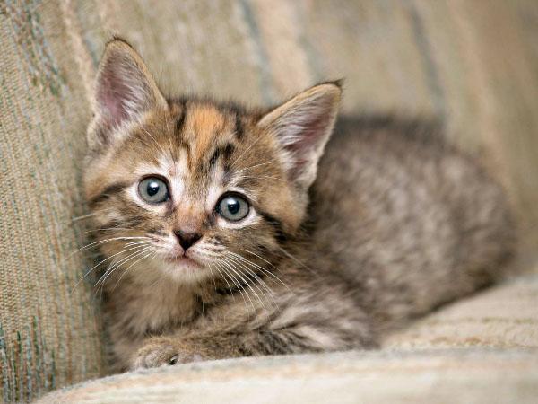 picture-cat01-100.jpg