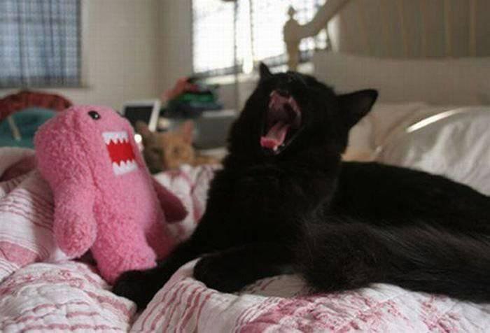 picture-cat01-102.jpg