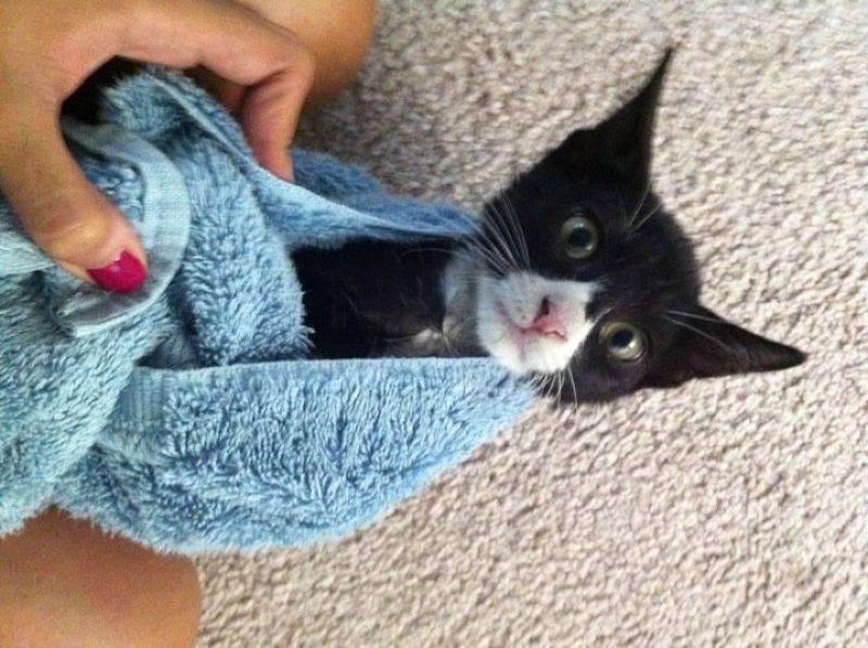 picture-cat01-103.jpg