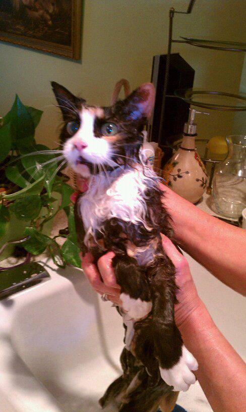 picture-cat01-104.jpg