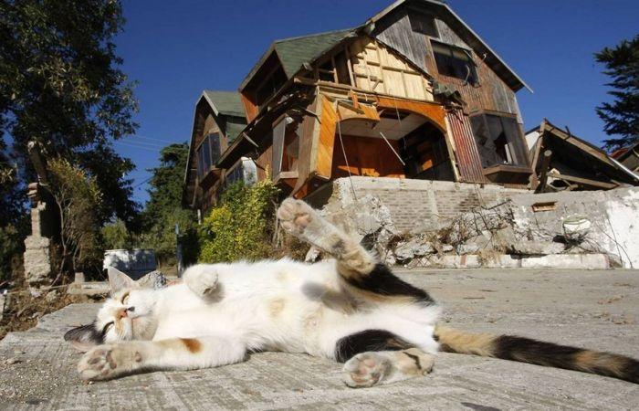 picture-cat01-105.jpg