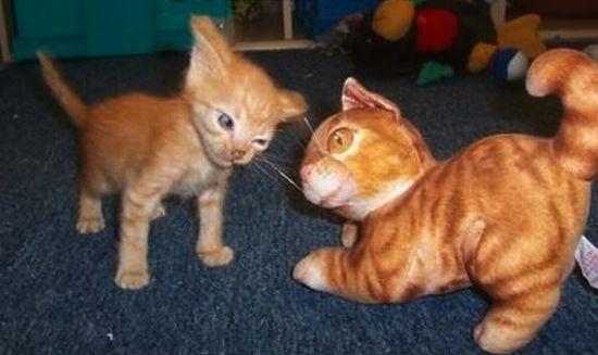 picture-cat01-106.jpg
