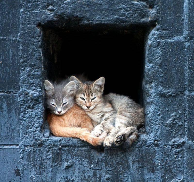 picture-cat01-107.jpg