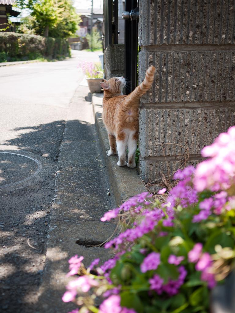 cat2-002.jpg