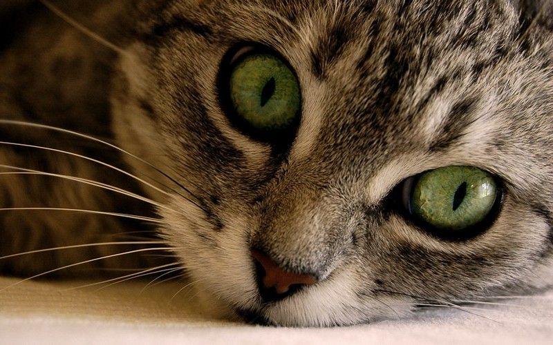 cat2-005.jpg