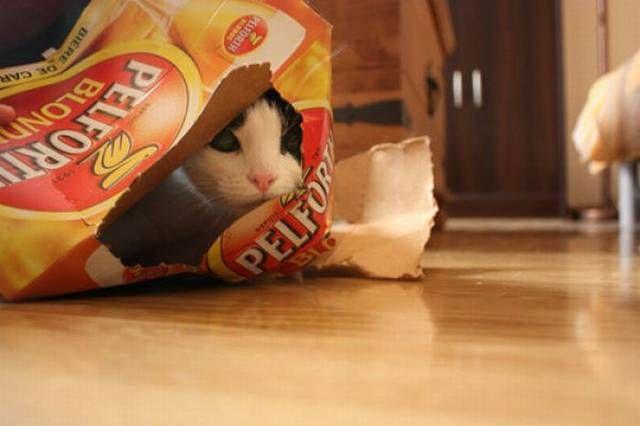 cat2-006.jpg