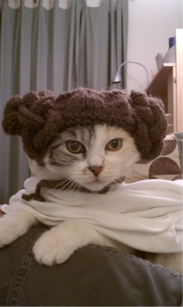 cat2-008.jpg