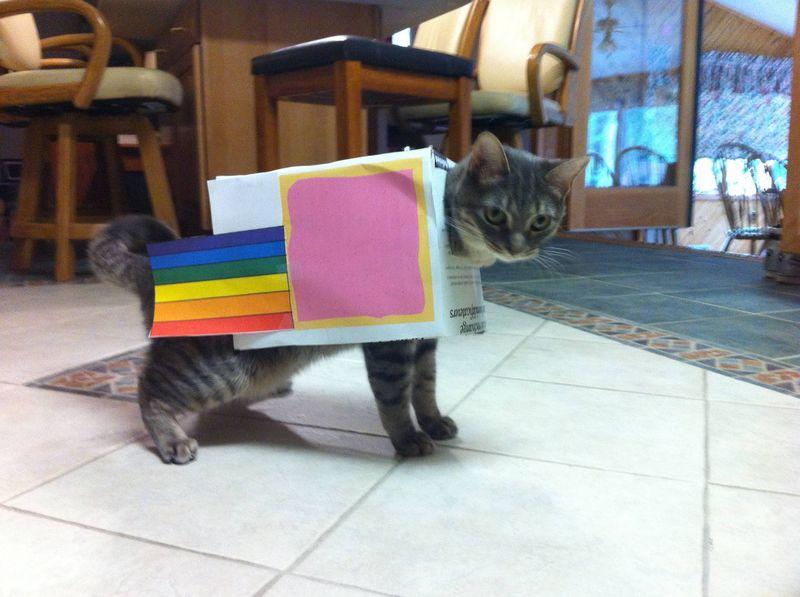 cat2-010.jpg