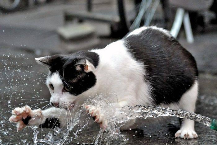 picture-cat01-113.jpg