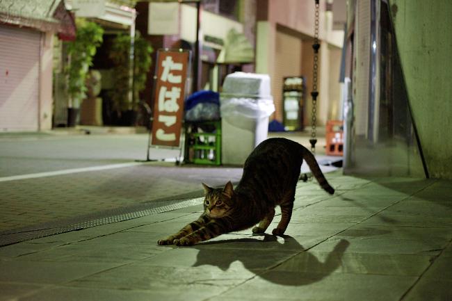 picture-cat01-114.jpg