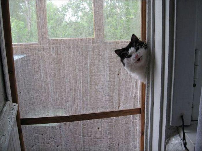 picture-cat01-122.jpg