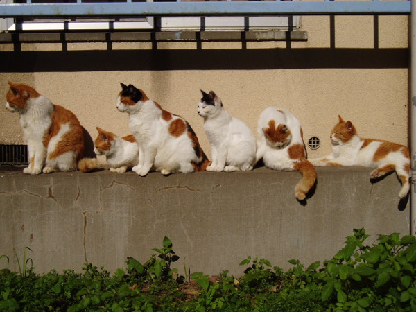 picture-cat01-124.jpg