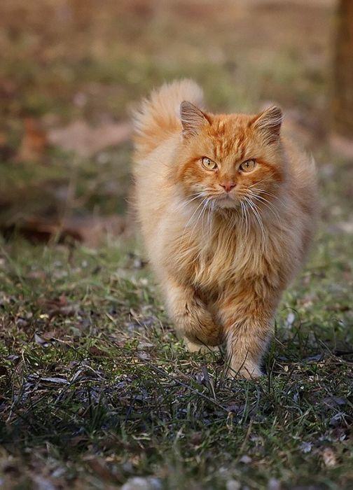 picture-cat01-125.jpg