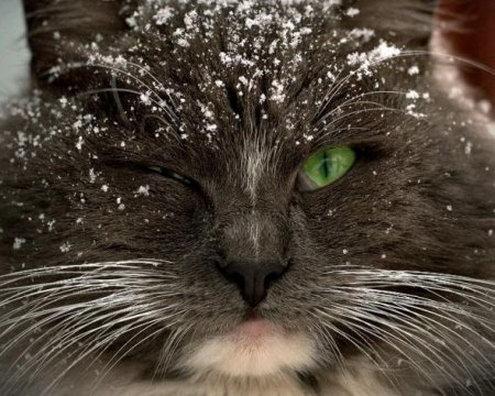 picture-cat01-126.jpg