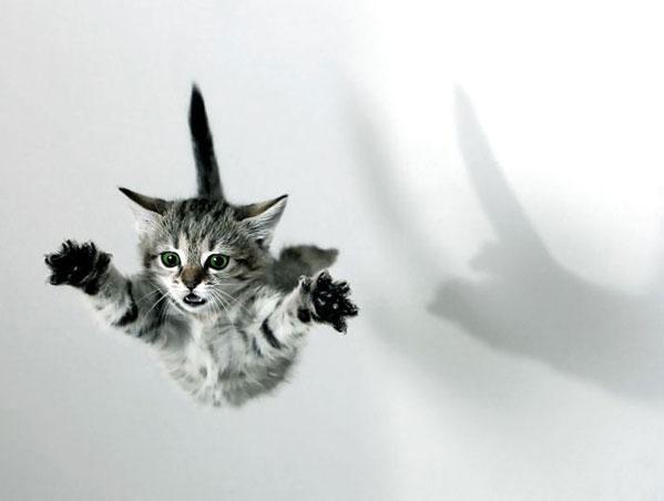 picture-cat01-127.jpg