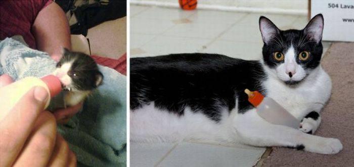 picture-cat01-129.jpg