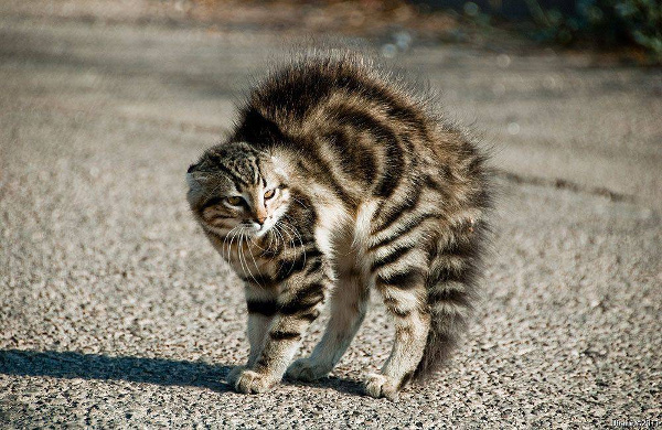 picture-cat01-132.jpg
