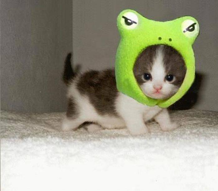 picture-cat01-134.jpg