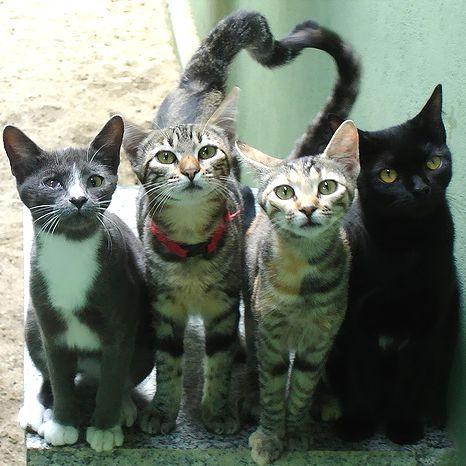 picture-cat01-135.jpg