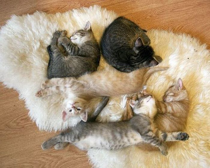 picture-cat01-136.jpg