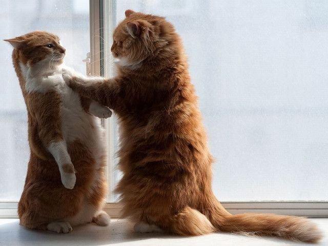 picture-cat01-137.jpg