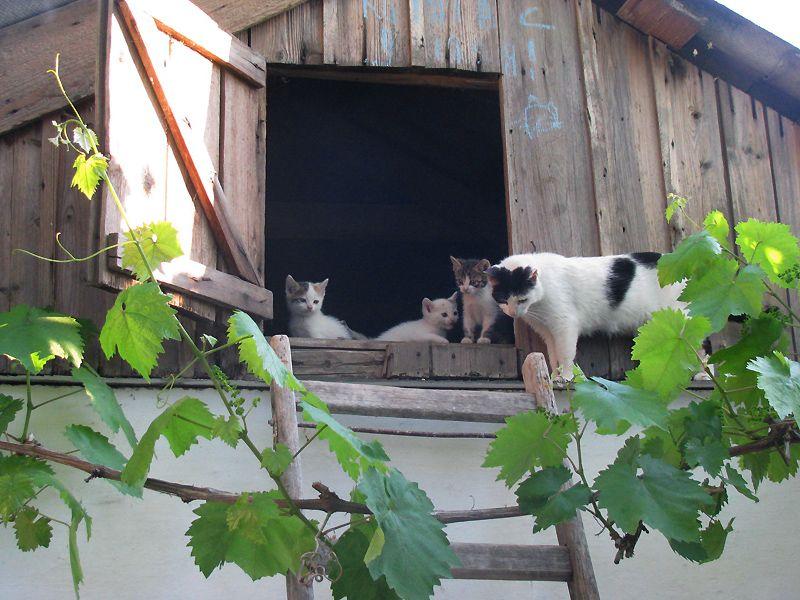 picture-cat01-138.jpg