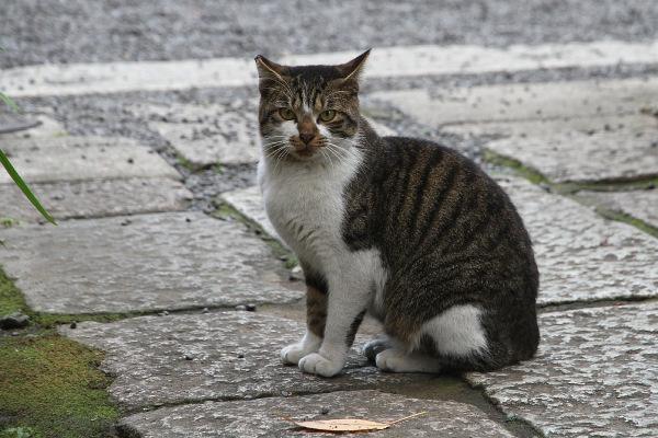 picture-cat01-139.jpg
