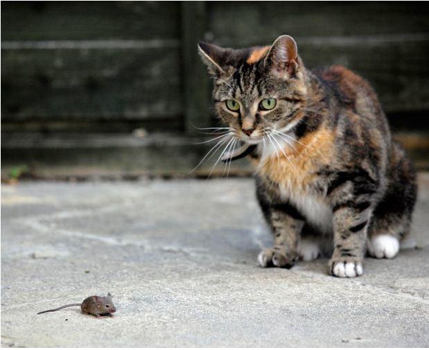 picture-cat01-142.jpg