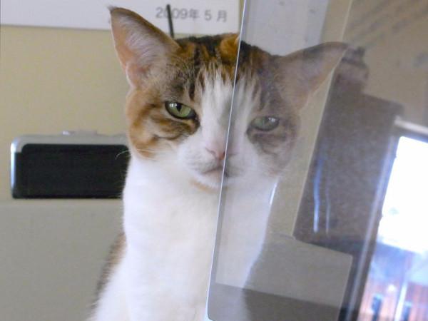 picture-cat01-148.jpg