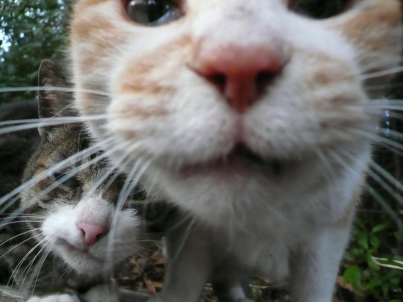picture-cat01-149.jpg