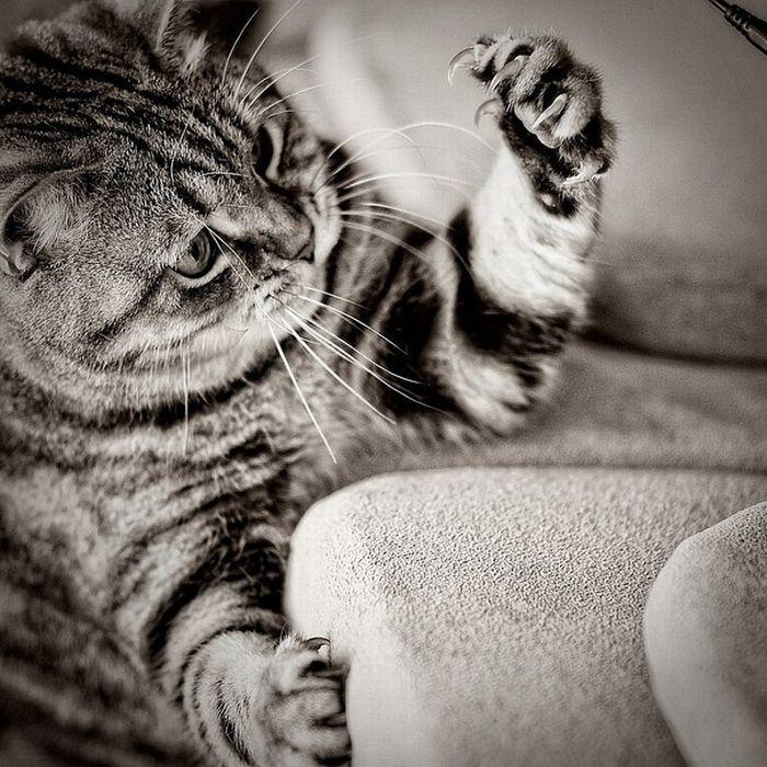 picture-cat01-150.jpg