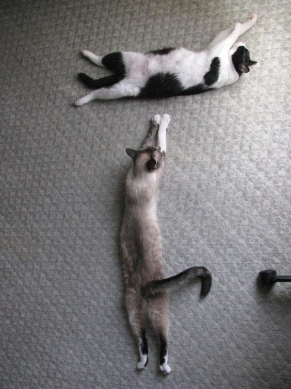 picture-cat01-281.jpg