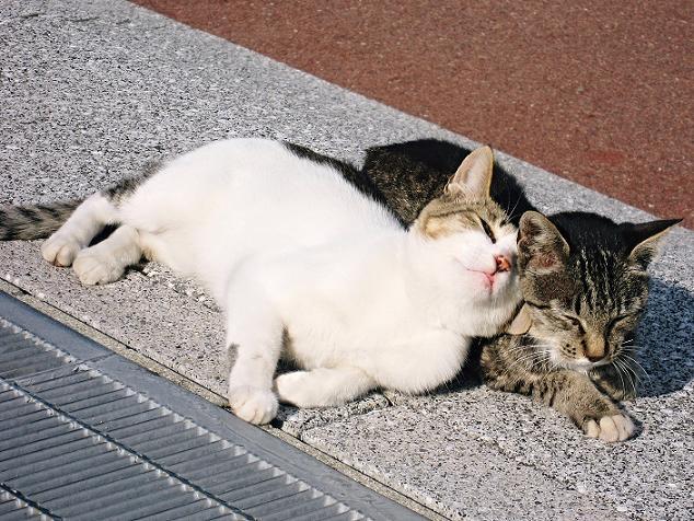 picture-cat01-282.jpg
