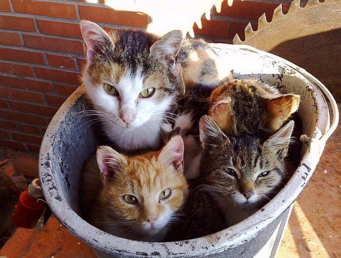 picture-cat01-155.jpg