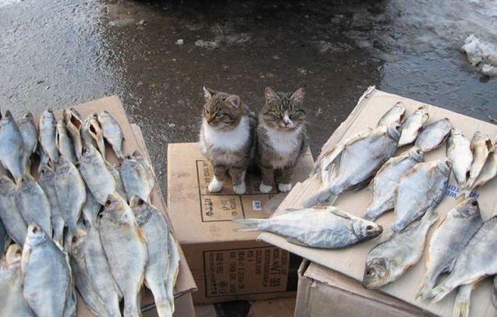 picture-cat01-158.jpg