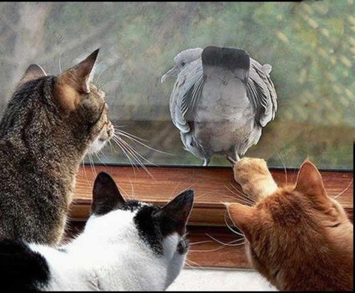 picture-cat01-160.jpg