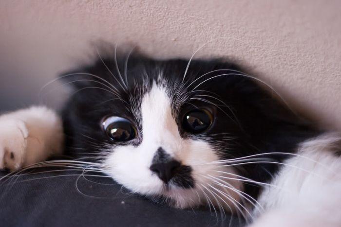 picture-cat01-163.jpg
