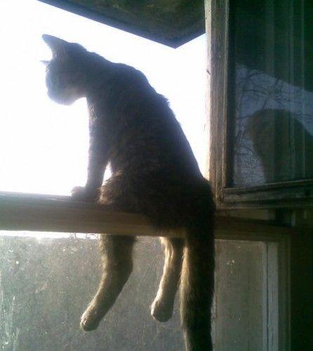 picture-cat01-164.jpg