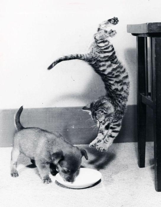 picture-cat01-165.jpg