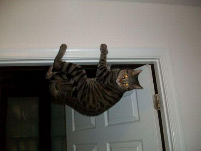 picture-cat01-168.jpg