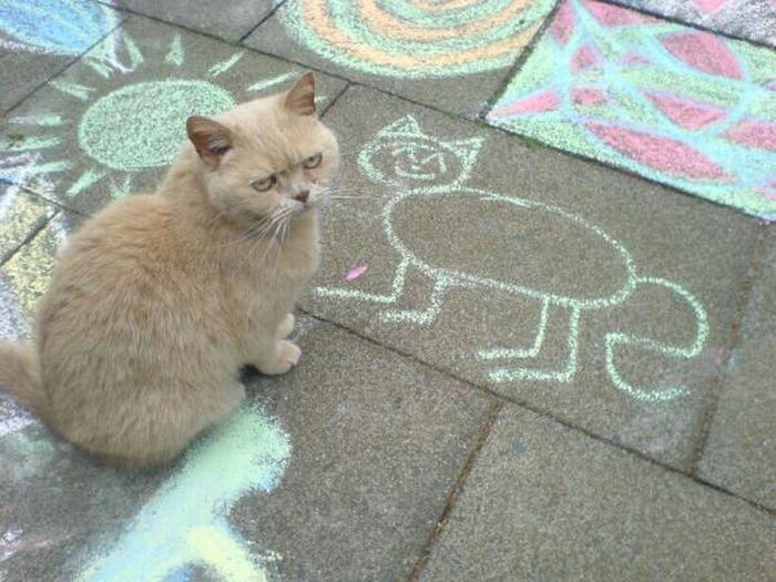 picture-cat01-169.jpg